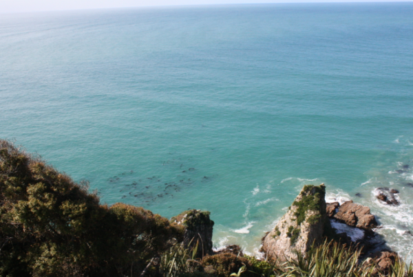 catlins, nugget point lookout